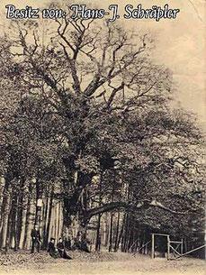 Tausendjährige Eiche am Hunrod um 1905