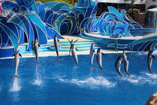 Marineland, nager avec les dauphins, cote d'azur, homelocation-sylvie.com