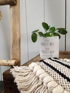 bougie, home decoration, déco plante, cosy home, webshop déco