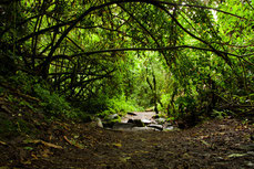 Regenwald im Inselinneren