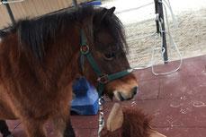 Eltern-Kind-Gruppe für kleine Kinder, um den spielerischen Zugang zum Pferd zu erlernen