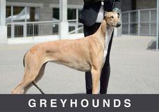 Greyhounds Mojave