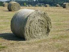 Heu- Stroh- Silageballen- u. Getreide Handel