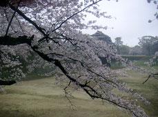 熊本城 熊本市城西コミュニティセンター