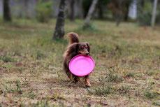 犬と楽しく暮らすドッグトレーニング