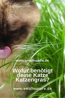 Wozu Katzengras?