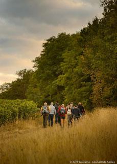 randonnee-balade-visite-guidee-vignes-vignoble-cave-Vouvray-Montlouis-Touraine-Amboise-Tours-Vallee-Loire