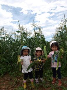 畑で大根を抜く、帽子をかぶった二人の子ども