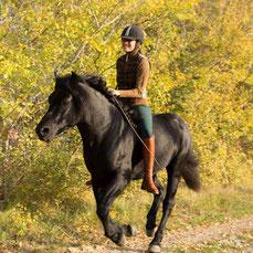 Giulia e Orfeo, stallone Bardigiano