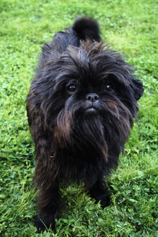 Black Mop Haired Dog