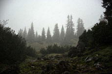 Schneefall im Unteren Filztal