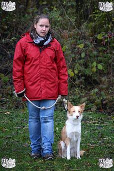 ec chiens dresseur de chien formé pour donner des cours en education canine