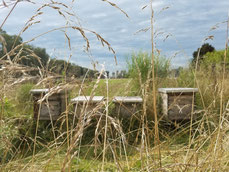 Bienenbeuten im Freien auf einer Wiese