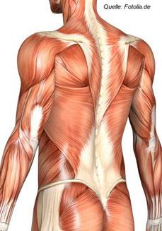 Ein starker Rücken kennt keinen Schmerz