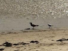 Albatross oder Seemöwe? Egal, das graue Wetter scheint denen beiden nichts auszumachen...