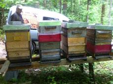 Waldbienenstand in Kirchschlag am Wechsel