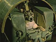 La chienne Laïka dans la capsule Spoutnik 2 par coach canin 16 educateur canin à cognac