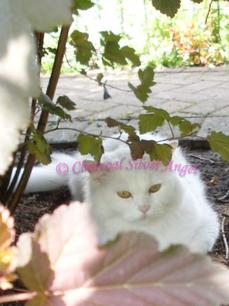 Unsere Katze Naomy