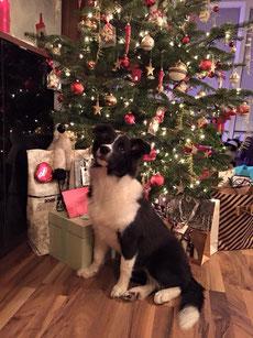 Lexi wartet auf ihr Geschenk