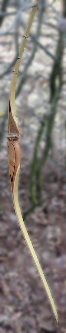 Langbogen, Bambus