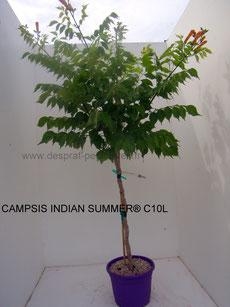 vente plantes pepiniere,s, desprat