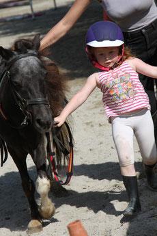 baby poneys et chevaux