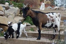 La ferme et ses animaux visite gratuite