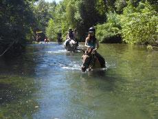 Leçons et balades à cheval dans l'Aude