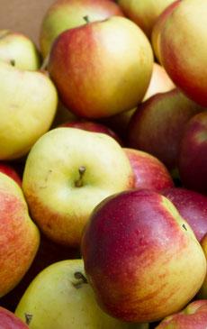 Obstbau Schmid Obst