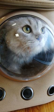 迷子猫,野良猫,動物保護,FeLV,FIV