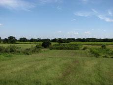 荒川の土手からの遠景