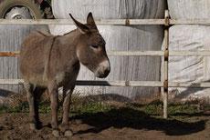 荒川河川敷の牧場で飼われているロバ