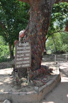 Todesbaum für über 2.000 Babys