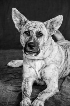 Die aufmerksame Elli, Labrador