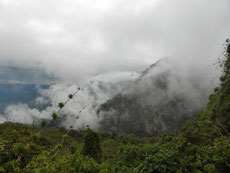 Wandern im Nebelwald