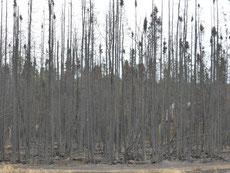 Irgendwo brennt's immer in Alaska. ...