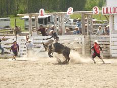 Die zweifellos härteste Disziplin: So lange wie möglich auf einem Bullen zu bleiben.