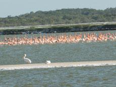 ... und Flamingos...