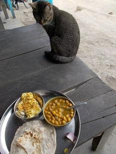 カレーを見つめる猫。