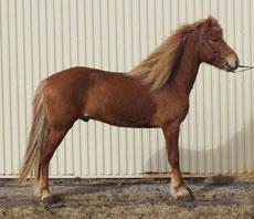 Figure 2. Le cheval est campé, trop tendu à l'avant