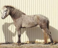 Figure 3. Ce cheval se tient de façon trop tendue à l'arrière.