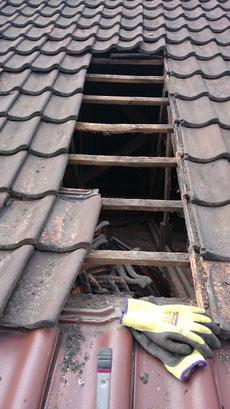 Gebäudeuntersuchung auf Fledermausquartiere und Gebäudebrüter: Vorübergehendes Abdecken eines Dachstuhls vor einem Abriss als Zugang zum Innenraum.