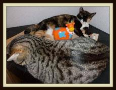 von unserer Mama der ungeliebten Wegwerfkatzen
