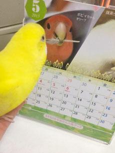 コザクラづくしカレンダー 感想写真