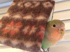 バードテント フン 文鳥 セキセイインコ コザクラインコ オカメインコ ウロコインコ 通販 洗い方 いつから おすすめ  バードベット バードベッド ハンモック