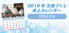 2019 文鳥づくし卓上カレンダー