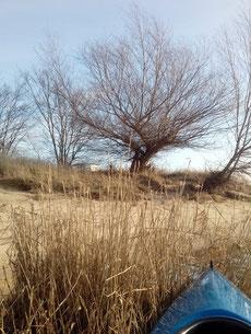 Blattlos noch die Uferidylle, bald sprießen die Knospen in Hülle und Fülle