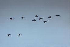 Vogelschwarm 12, 40 x 60 cm, Öl auf Leinwand, 2011
