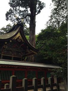 鹿島神宮5