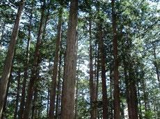 桧の無垢の木